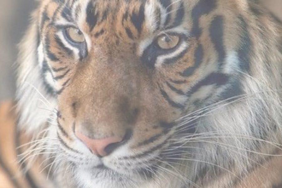Sales tijgers gezocht! Amsterdam | Den Bosch | Eindhoven (24-32-37 uur)